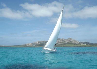 Escursioni Asinara - Gite in barca nel parco nazionale dell'asinara - Asinara Sail Experience - gli animali (11)
