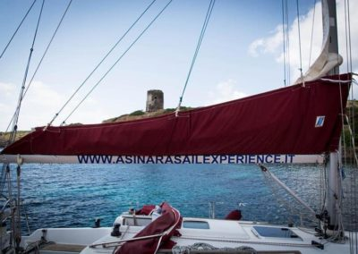 Escursioni Asinara - Gite in barca nel parco nazionale dell'asinara - Asinara Sail Experience - gli animali (16)
