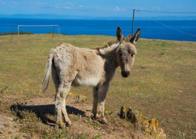 Escursioni Asinara - Gite in barca nel parco nazionale dell'asinara - Asinara Sail Experience - gli animali (18)