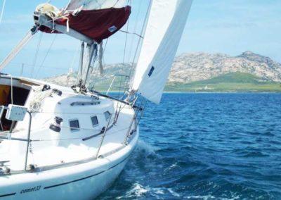 Escursioni Asinara - Gite in barca nel parco nazionale dell'asinara - Asinara Sail Experience - gli animali (19)