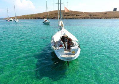Escursioni Asinara - Gite in barca nel parco nazionale dell'asinara - Asinara Sail Experience - gli animali (25)