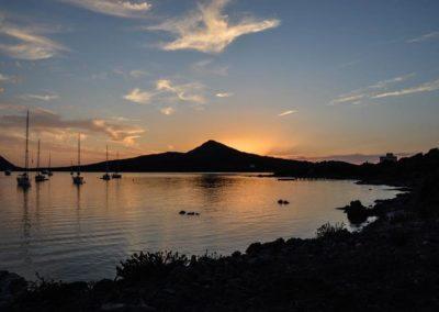 Escursioni Asinara - Gite in barca nel parco nazionale dell'asinara - Asinara Sail Experience - gli animali (27)