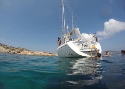 Escursioni Asinara - Gite in barca nel parco nazionale dell'asinara - Asinara Sail Experience - gli animali (28)