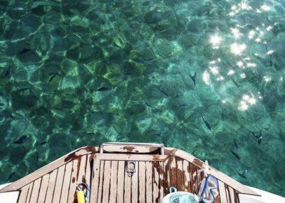 Escursioni Asinara - Gite in barca nel parco nazionale dell'asinara - Asinara Sail Experience - gli animali (29)