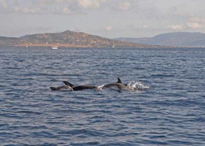 Escursioni Asinara - Gite in barca nel parco nazionale dell'asinara - Asinara Sail Experience - gli animali (3)