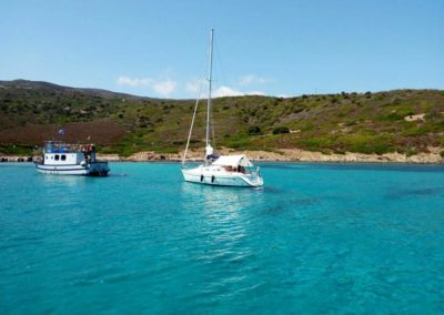 Escursioni Asinara - Gite in barca nel parco nazionale dell'asinara - Asinara Sail Experience - gli animali (7)