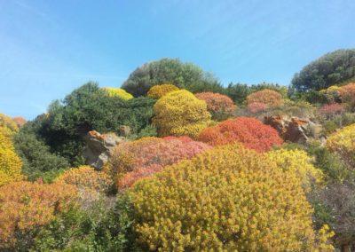 Escursioni Asinara - Gite in barca nel parco nazionale dell'asinara - Asinara Sail Experience (37)