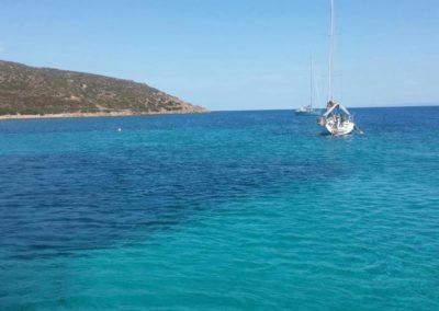Escursioni Asinara - Gite in barca nel parco nazionale dell'asinara - Asinara Sail Experience - gli animali (10)