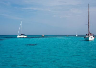 Escursioni Asinara - Gite in barca nel parco nazionale dell'asinara - Asinara Sail Experience - gli animali (14)