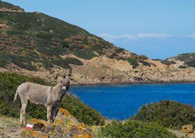 Escursioni Asinara - Gite in barca nel parco nazionale dell'asinara - Asinara Sail Experience - gli animali (15)