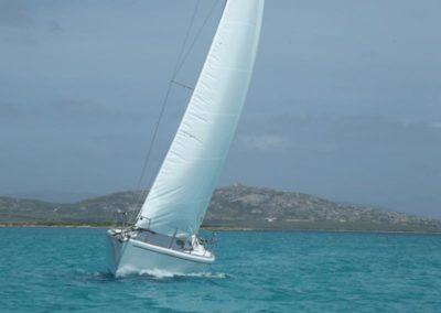 Escursioni Asinara - Gite in barca nel parco nazionale dell'asinara - Asinara Sail Experience - gli animali (20)