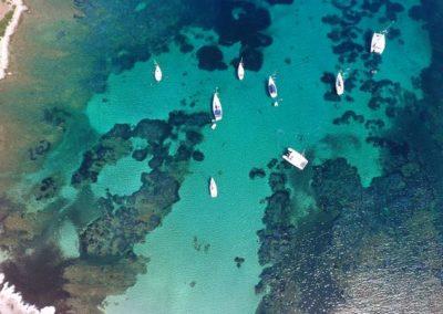 Escursioni Asinara - Gite in barca nel parco nazionale dell'asinara - Asinara Sail Experience - gli animali (24)