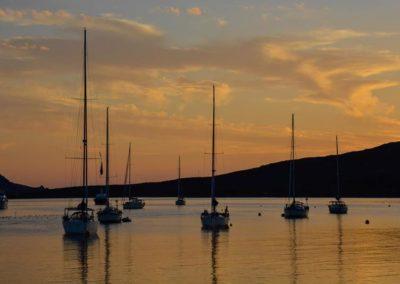 Escursioni Asinara - Gite in barca nel parco nazionale dell'asinara - Asinara Sail Experience - gli animali (26)