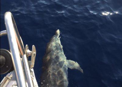 Escursioni Asinara - Gite in barca nel parco nazionale dell'asinara - Asinara Sail Experience - gli animali