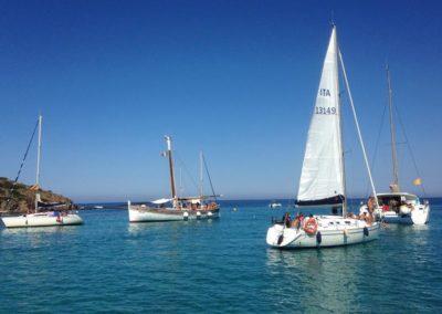 Escursioni Asinara - Gite in barca nel parco nazionale dell'asinara - Asinara Sail Experience - gli animali (9)